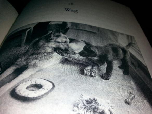 Solo and Coda in book